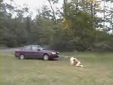 Blond Hitchhiker Gets Brutally Raped and Dumped In the Middle Of Nowhere